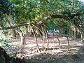 Sakhibata temple ground, kendrapara.JPG