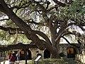 San Antonio, TX - Alamo Mission (Mission San Antonio de Valero) - panoramio (1).jpg
