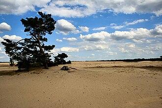 Hoge Veluwe National Park - Image: Sand Area Hoge Veluwe