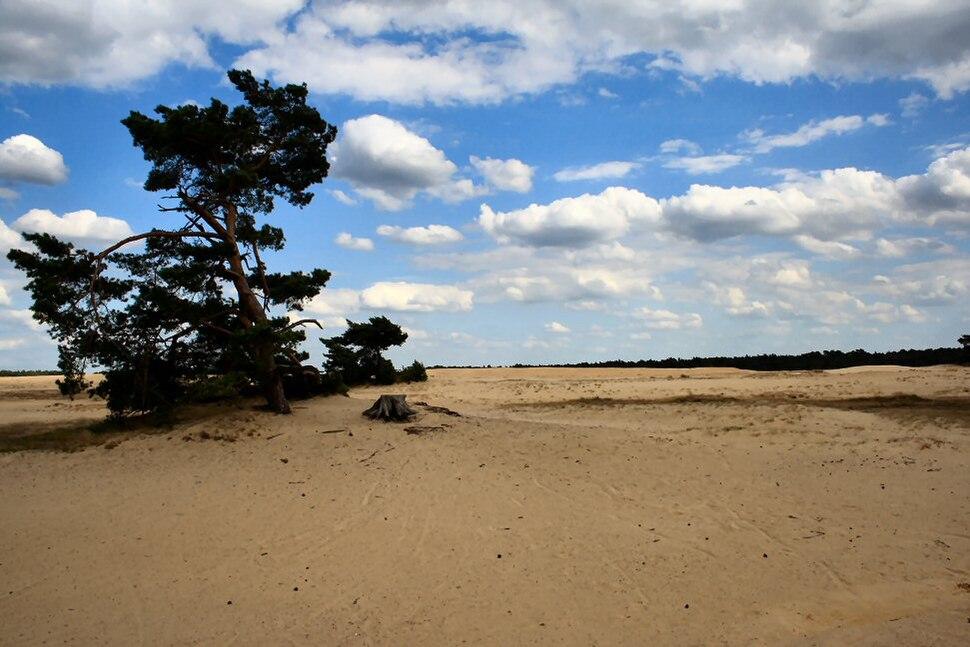 Sand Area Hoge Veluwe