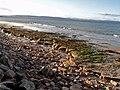 Sandstone wave-cut platform - geograph.org.uk - 257498.jpg