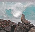 Sea lion and crabs at the sea shore (4122710960).jpg