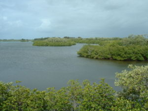 Orchid Island (Florida) - Indian River shoreline of Sebastian Inlet State Park