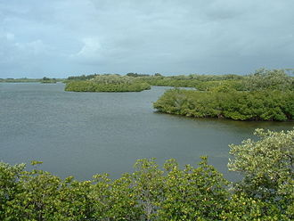 Orchid Island (Florida) - Indian River shoreline at Sebastian Inlet State Park