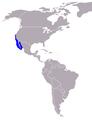 Seelöwe-Zalophus californianus-World.png