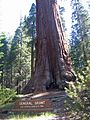 Sequoia National Park General Grant - Flickr - GregTheBusker.jpg