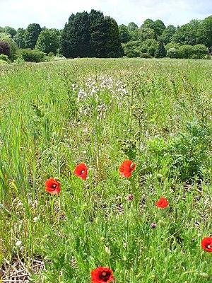 Effingham, Surrey - Image: Set aside Field, Effingham geograph.org.uk 438454