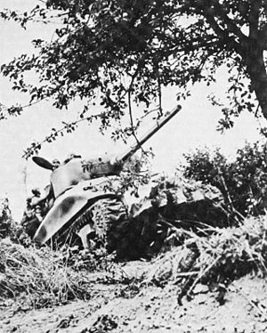 A tank moves through a partially destroyed hedgerow. A tree dominates the upper-right of the photograph