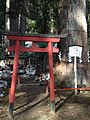 Shimboku of Nikko Futarasan Shrine.jpg