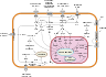 Signal transduction pathways.svg