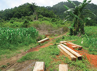 Illegal logging - Signs of illegal timber poaching on the boundary of the protected area around the Cagua Volcano, Cagayan, Philippines.