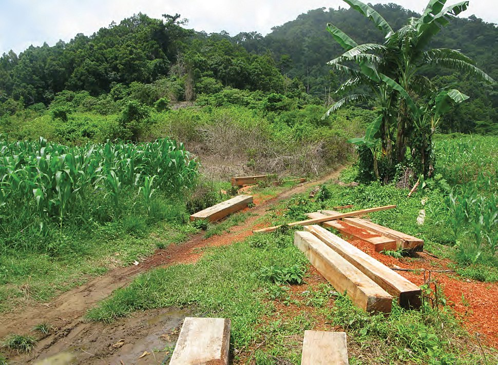 Signs of illegal timber poaching on the boundary of the Mt. Cagua protected area - ZooKeys-266-001-g017