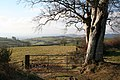 Silverton, above Greenslinch - geograph.org.uk - 96299.jpg