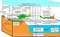 Simplified diagram of the global carbon cycle.jpg