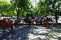 Sineu - market day - panoramio (17).jpg