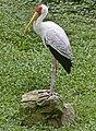 Singapore Bird Park-27and (2939970618).jpg