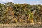 Slate Run-Wetlands in Fall 3.jpg