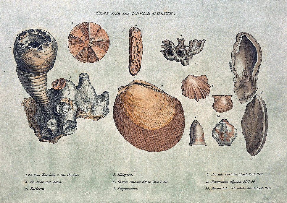 Smith fossils2