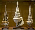 Snail's Tower Helical Shells (15489576269).jpg