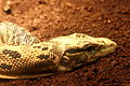 Snake (4139461254).jpg