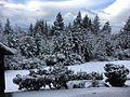 Snow (33855713561).jpg
