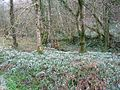 Snow Drop Valley - geograph.org.uk - 22207.jpg
