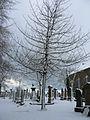 Snow in Nigg Kirk Cemetary (3255841985).jpg