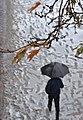 Snowy day of Rasht - 26 November 2011 17.jpg