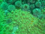 Sponge and Urchins at Steps DSC07401.jpg