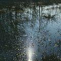 Spring (1980). (19582648960).jpg