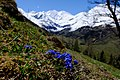 Spring In Alps (228028139).jpeg