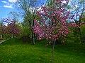 Spring in Lovers' Park, Yerevan (2).jpg