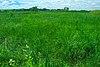 Springvale Wet Prairie.jpg
