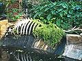 Squelette d'éléphant.jpg