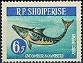 Stamp of Albania - 1964 - Colnect 342866 - Atlantic Mackerel Scomber scombrus.jpeg