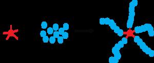 Atom-transfer radical-polymerization - Illustration of a star initiator for ATRP