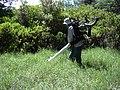 Starr-030626-0027-Cynodon dactylon-gas aspirator with Forest-Kahului-Maui (24340224060).jpg