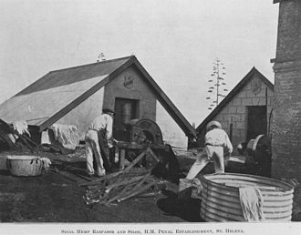 St Helena Island National Park - Prisoners making fibres from flax to turn into rope, 1911
