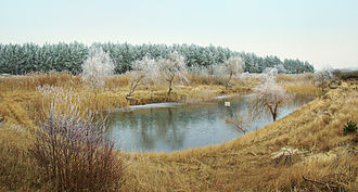 Pond - A pond in Swarzynice, Poland