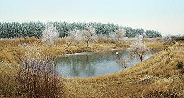 Image Result For Building Backyard Pond