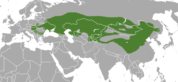 Steppe Polecat area