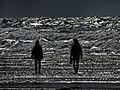 Strandläufer an der französischen Atlantikküste.jpg