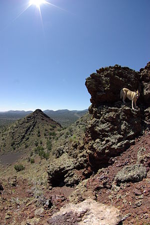 Strawberry Crater - Near the summit
