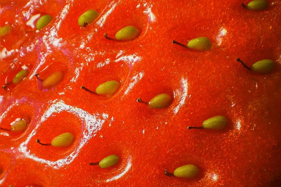 Strawberry surface close up macro