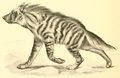 Striped hyena mammalia.png