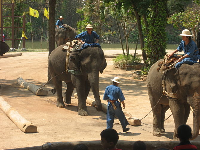 Elephants dragging logs at the Thai Elephant C...