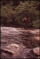 TROUT FISHERMAN CASTING ON TWITCHELL CREEK NEAR BIG MOOSE NEW YORK, IN THE ADIRONDACK FOREST PRESERVE - NARA - 554519.tif