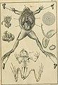 Tableau encyclopédique et méthodique des trois règnes de la nature - dédié et présenté a M. Necker, ministre d'État, and directeur général des Finances (1789) (14780042514).jpg