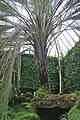 Tatton Park gardens 2009-20.jpg
