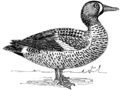 Teal 1 (PSF).png